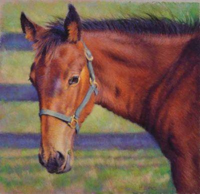LawsHeather-SpringBayFoal-16X1434