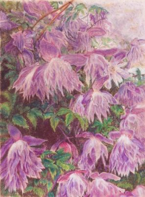 Rodrigues, Willo, Clematis Macropetala, 12x16