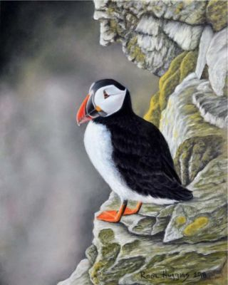 Huggin,Rona-Puffin,RefMGibbons-8X10Inches