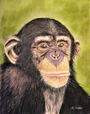 Mueller,Ingrid-Chimp-14x11
