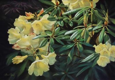 Beth Bouffard, MPAC, Rhododendron Sunspray, 13x19